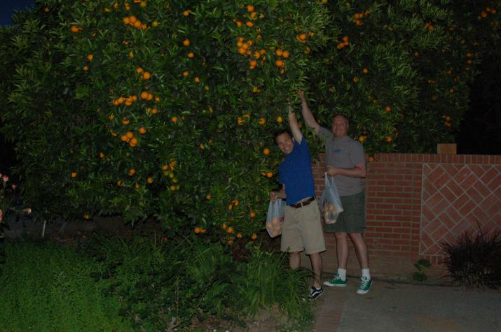 Todd and Chris collect oranges for some fresh squeezed OJ. -
